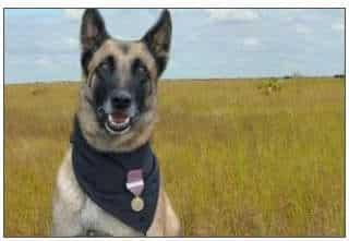Drug Dog trained on SOKKS