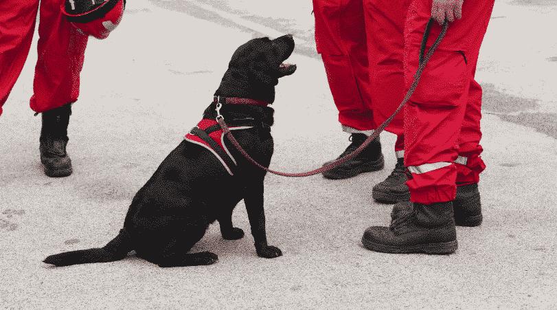 SOKKS Validation Programs for Detector Dogs
