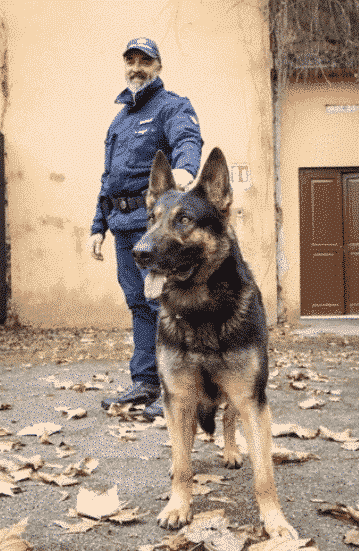 K9 Detection dogs for the Police in Europe Trained with SOKKS pm