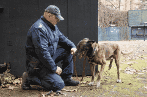 Police Dogs for The Detection of Drugs are all trained using SOKKS