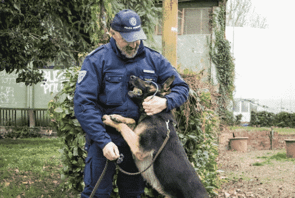 Sokks Trained Police Dogs